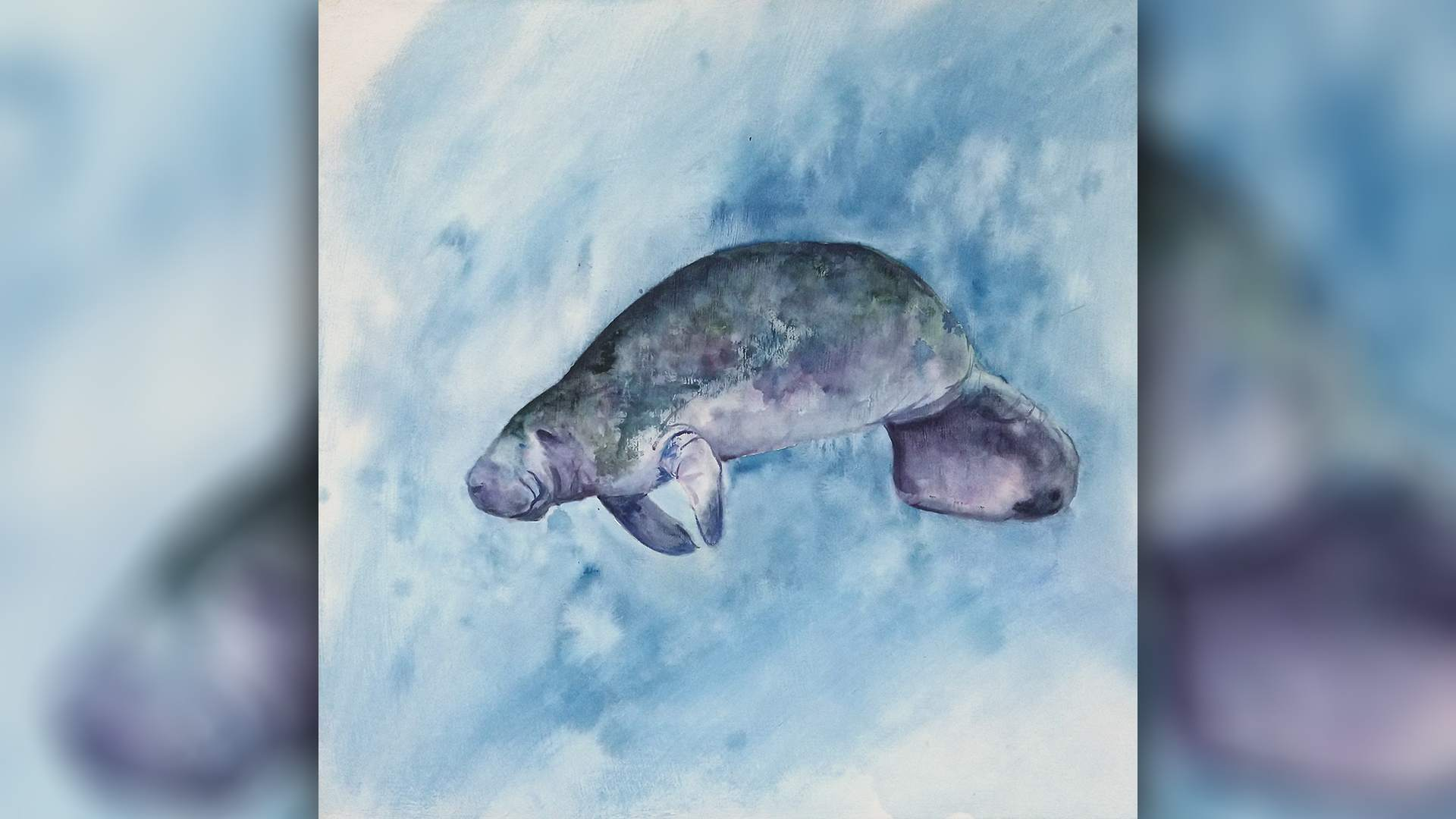 Live with Anita Pounder – Manatee in Watercolour
