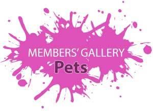 Members' Gallery - Pets