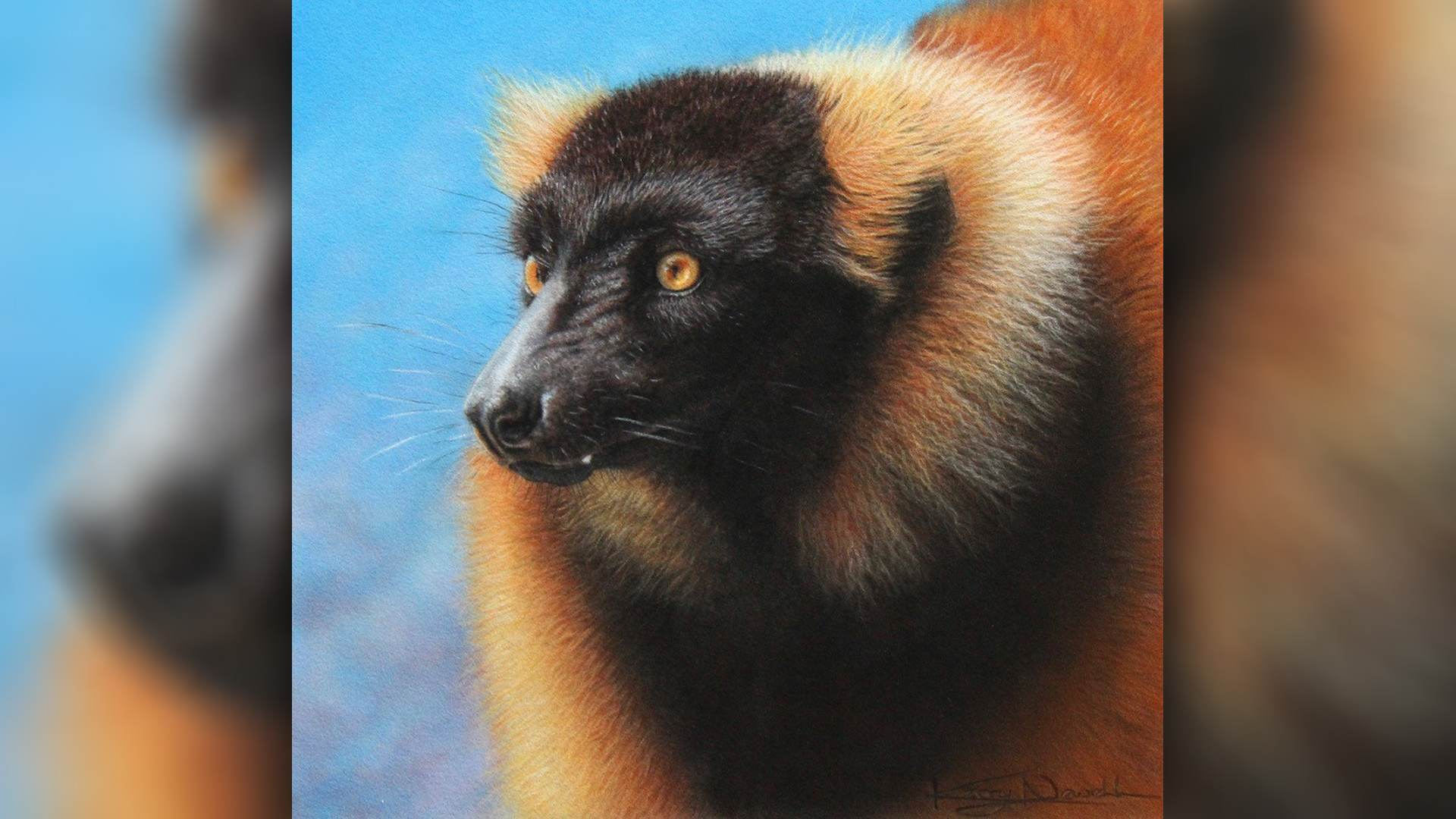 SAA Live – Kerry Newell Workshop – Red Ruffed Lemur Pastel & Pastel Pencil