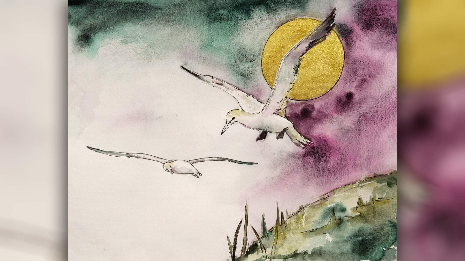 Live with Anita Pounder – Gannets in Watercolour