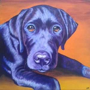 Ted the black Labrador