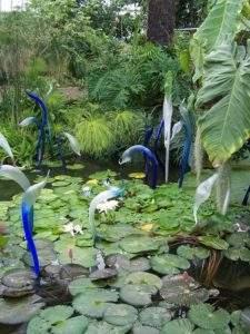 Lily pond, Kew Gardens