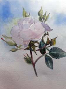 Start off with very light washes on the body of the rose as it is easier to add colour than take it away.