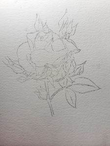 Pencil sketch of the rose and buds