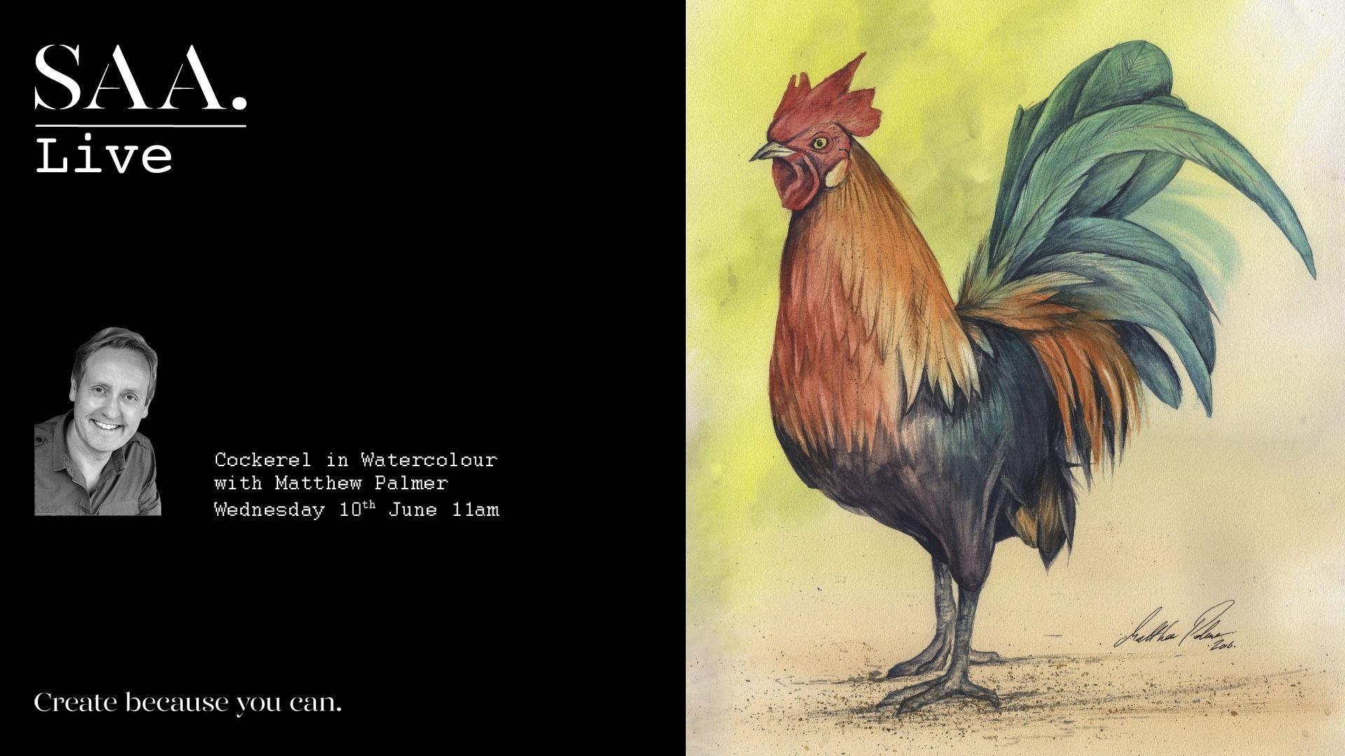 SAA Live – Matthew Palmer Demonstration – Cockerel in Watercolour
