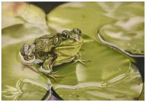 A Frog Study