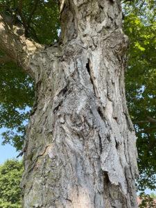 Barking up the wrong tree